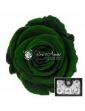 Trandafiri Criogenati Verde Inchis XLGre02