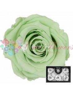 Trandafiri Criogenati Verde Lime XLGre04