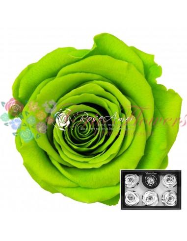 Trandafiri Criogenati Verde Neon XLGre05