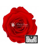 Trandafiri Criogenati Rosu Aprins XLOra03