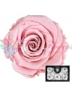 Trandafiri Criogenati Roz Pal XLPin04