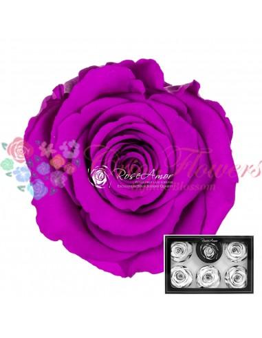 Trandafiri Criogenati Mov Intens XLPur02