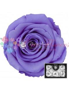 Trandafiri Criogenati Mov Deschis XLVio01