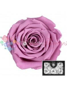 Trandafiri Criogenati Lila XLVio02
