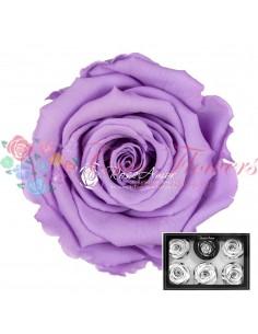 Trandafiri Criogenati Lila Pal XLVio03