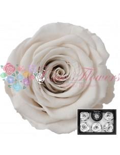 Trandafiri Criogenati Alb XLWhi04