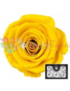 Trandafiri Criogenati Galben XLYel02
