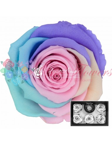Trandafiri Criogenati Multicolor Pastel XLRaPin04