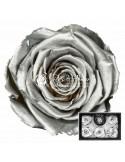 Trandafiri Criogenati Argintiu XLSilver