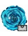 Trandafiri Criogenati Bleo Metalic XLMetBlu02