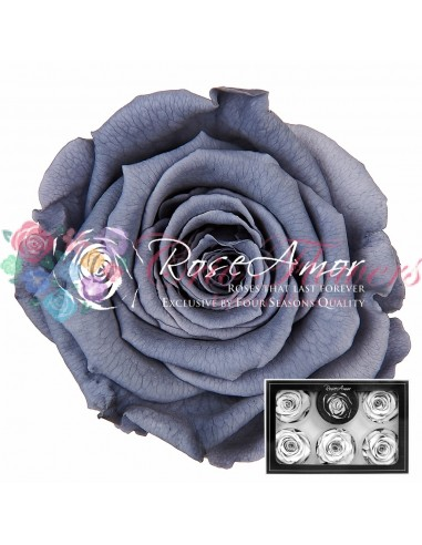 Trandafiri Criogenati Gri XLGry01