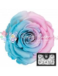 Trandafiri Criogenati Bleo Roz XLBic40