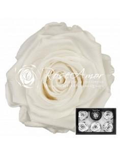 Trandafiri criogenati XLWhi01 Alb Pur