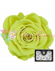Trandafiri Criogenati Galben Neon XLYel05