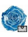 Trandafiri Criogenati Bleo Perlat XlPearlBlu02
