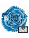 Trandafiri criogenati XL Bleo Perlat