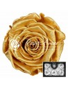 Trandafiri Criogenati Toffee Perlat XL