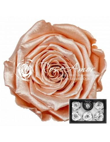 Trandafiri Criogenati Somon Satinat XL