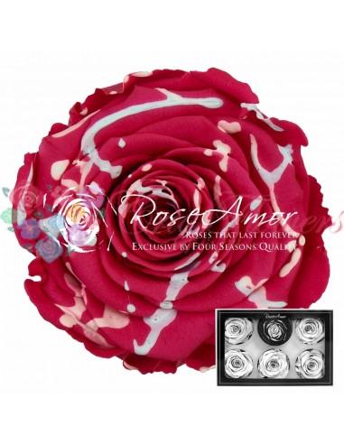 Trandafiri Criogenati XLFesPin03 Ciclam