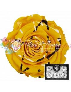 Trandafiri Criogenati Festiva Galben XLFesYel02