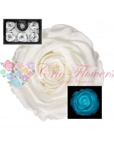Trandafiri Criogenati Albastru Fosforescent XLGlowBlue