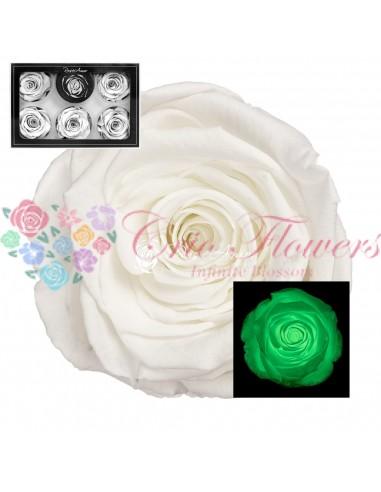 Trandafiri Criogenati Verde Fosforescent XLGlowGreen