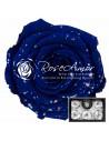 Trandafiri Criogenati Galaxy Albastru XLGalaxyBu03