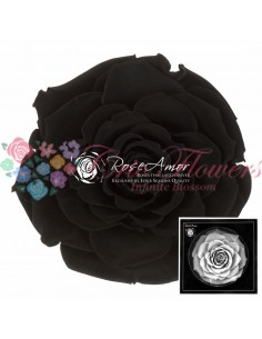Trandafiri Criogenati Negru BonitaBla01