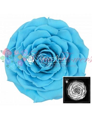 Trandafiri Criogenati Bleo BonitaBlu01
