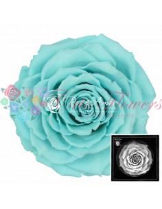 Trandafiri Criogenati Turquoise BonitaBlu02