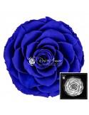 Bonita Blu03