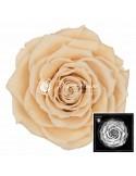 Trandafiri Criogenati Sampanie BonitaCha01