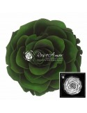 Trandafir Criogenat Verde BonitaGre02