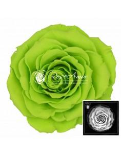 Trandafiri Criogenati Verde Neon BonitaGre05