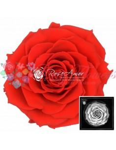 Trandafiri Criogenati Rosu Aprins BonitaOra03