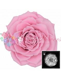 Trandafiri Criogenati Roz BonitaPin04