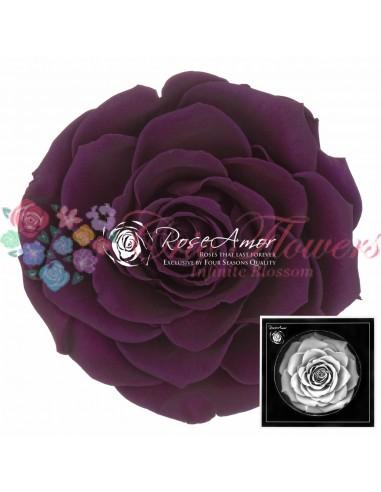 Trandafiri Criogenati Mov Indigo BonitaPur01