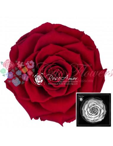 Bonita Red01