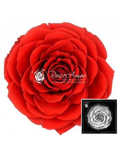 Trandafiri Criogenati Rosu Deschis BonitaRed02