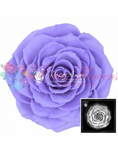 Trandafiri Criogenati Mov Deschis BonitaVio01