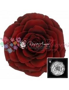Trandafiri Criogenati Rosu Ciocolata BonitaCho01