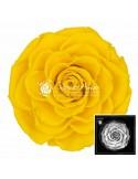 Trandafiri Criogenati Galben BonitaYel02