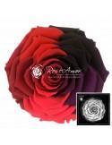 Trandafiri Criogenati Multicolor Dark BonitaRaPin05