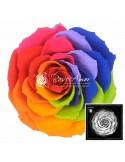 Trandafiri Criogenati Multicolor Rosu BonitaRaRed02