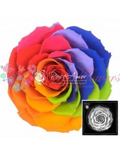 Bonita Rainbow Red02
