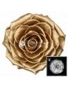 Trandafiri Criogenati Auriu BonitaGold