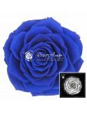 Trandafiri Criogenati Albastru DiamondDust BonitaDBlu03