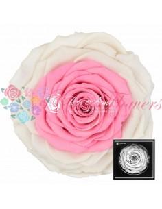 Trandafir Criogenat Alb Roz XXLBic22
