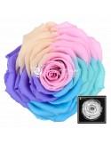 XXL Rainbow Pin04