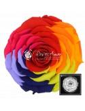 XXL Rainbow Red02